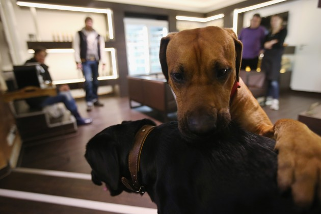 Deli For Dogs And Cats Opens In Berlin